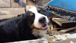 ~ DOG WASTE REMOVAL ~