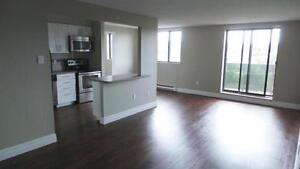 2 bedrooms for the price of 1! PLUS ONE MONTH FREE! Kitchener / Waterloo Kitchener Area image 7
