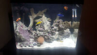 Aquarium with fish and accessories for sale.