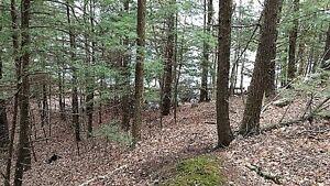 Vacant Land on Loon Lake - 1.2 Acres