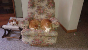 2 Indoor Neutered Adult Male Cats for free