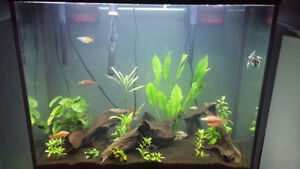 40 Gallon Tank, Includes everything