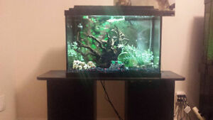 20 Gallon Fish Tank with Aquarium Equipment + Stand !