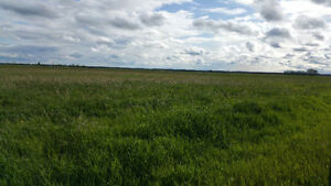 FOR SALE 2 PARCELS OF 77.54 ACRES GREAT HWY 28 EXPOSURE Strathcona County Edmonton Area image 1