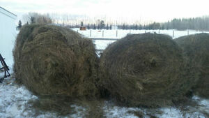 Manure and Hay for Mulch