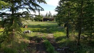 Live off the grid, be self sufficient with this remote homestead Williams Lake Cariboo Area image 8