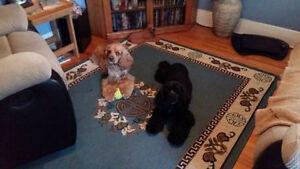 In-Home Pet Grooming London Ontario image 6