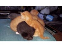 4 beautiful kittens left