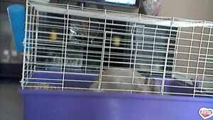 dwarf angora lion head rabbit with cage and accessories for sale
