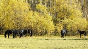 62 Acres w mobile, water well, horse set up