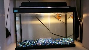 5 gallon aquarium with light & blue rocks
