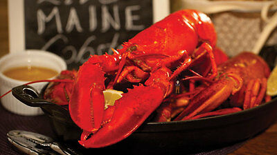 Get Maine Lobster - 4 Live Maine Lobsters (1.1-1.2lb each) w/ FREE SHIPPING
