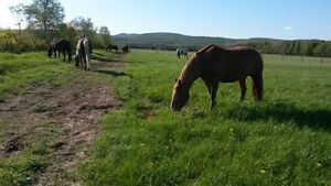 Pension pour chevaux **3 box de disponible**