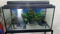 25 Gallon Fisk Tank with Stand and Accessories