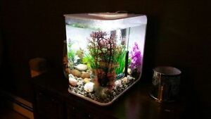 Biorb Flow 15L Fish Tank