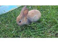 Baby rabbits and 2 adults rabbits