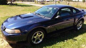 2003 Ford Mustang Belleville Belleville Area image 7