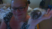 hamster needs a new home as soon as possbile