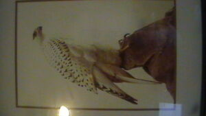 Icelandic Gyr Falcon Print Kitchener / Waterloo Kitchener Area image 1