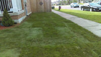 kentucky Blue Grass Installations $1.5 for small areas