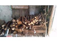 Pile of seasoned logs