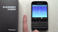 Blackberry Classic - 3 months old