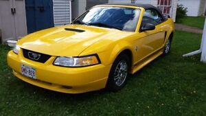 1999 Ford Mustang Convertible Buy Now For $6000 Before Storage