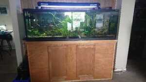 Fish for sale & accessories