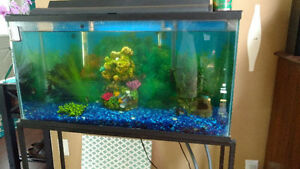 Fish Tank (35 galons) + Kit + Accessories