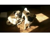 2 bedroom property who allows 2 small dogs wanted