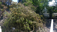 Livermore Group Junk and Tree Removal