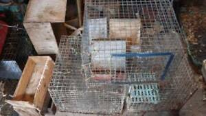 Rabbit Cages and Accessories