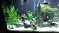 castle for large fish tank    SOLD