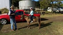 """Honey"" 5 YO, 10 Hands High, Chestnut Pony Mare FOR SALE Toowoomba 4350 Toowoomba City Preview"