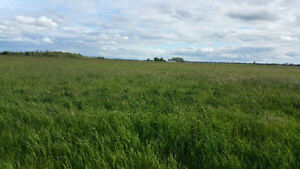 FOR SALE 2 PARCELS OF 77.54 ACRES GREAT HWY 28 EXPOSURE Strathcona County Edmonton Area image 2