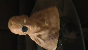 Large Clay/Plaster Bust Kitchener / Waterloo Kitchener Area image 2