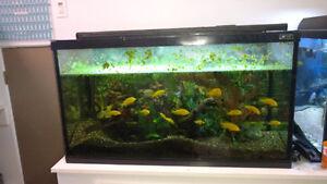 Aquarium 55 gallons avec tout le marériel