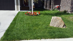 Full serve fall clean up. Gutters, windows, lawns, siding & more London Ontario image 6