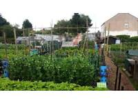 South Normanton Allotments