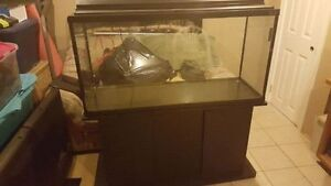80 gallon Haggen Aquarium with Black Stand and Canopy