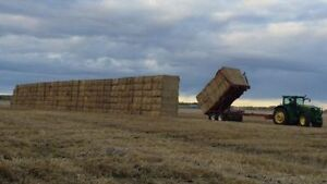 LARGE SQUARE STRAW BALES FOR SALE
