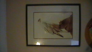 Icelandic Gyr Falcon Print Kitchener / Waterloo Kitchener Area image 3