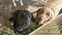 3 loving dogs to give away (willing to separate them) Seaforth Mackay Surrounds Preview