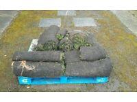 Turf rolls +10 sqm
