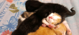 (All kittens are reserved) Kittens