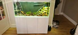 Aquael glossy 120 fish tank