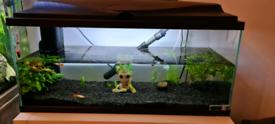 Ciano cf80 aquarium/ fishtank