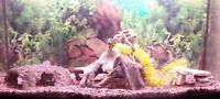 Fish accessories for aquarium