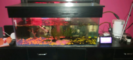 120 litre aquarium tank 3 ft 1 ft x 18 inch with hood and light