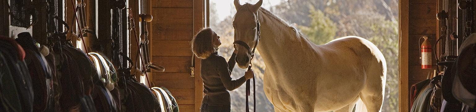 Ausrüstung für Pferdefreunde